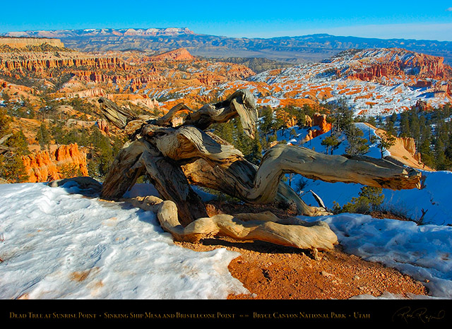 Bryce_Canyon_Dead_Tree_at_Sunrise_Point_5315