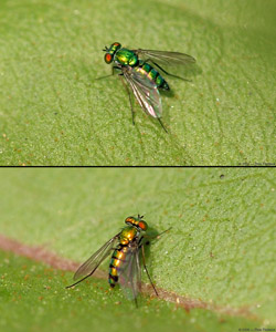 GreenFly_8262-67