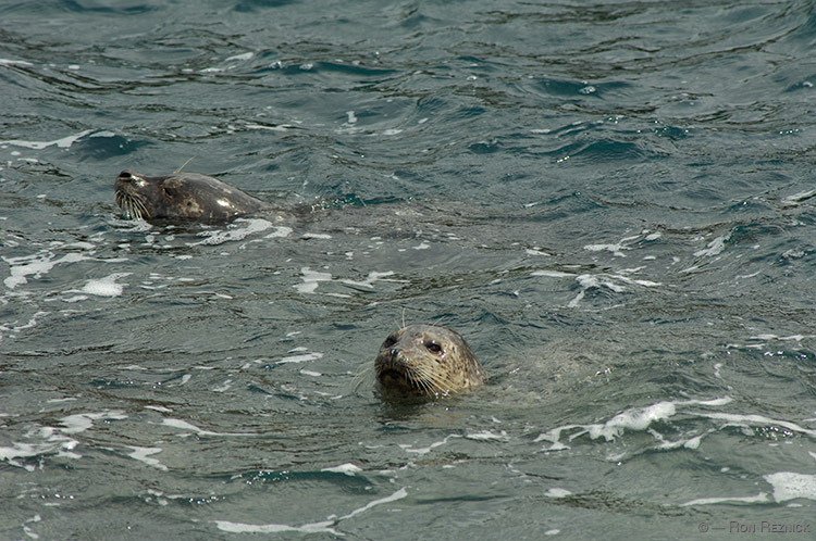 HarborSeals_X0281