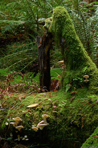 MuirWoods_MossyArch_Mushrooms_X2509