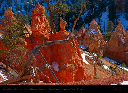 Bryce_Canyon_Dead_Tree_in_Winter_5404