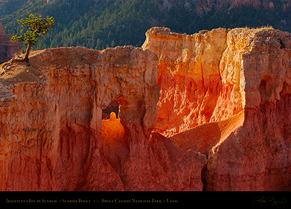 Bryce_Canyon_Iridescent_Fin_at_Sunrise_5564