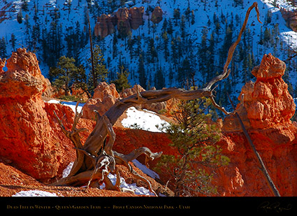 Bryce_Canyon_Dead_Tree_in_Winter_5402