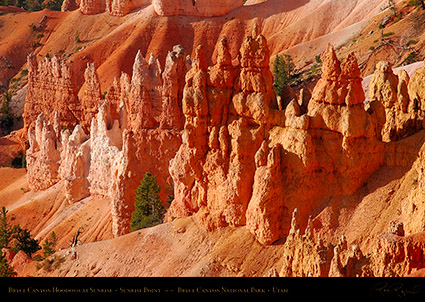 Bryce_Canyon_Hoodoos_Sunrise_Point_1786