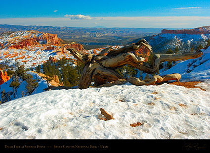 Bryce_Canyon_Dead_Tree_at_Sunrise_Point_5313