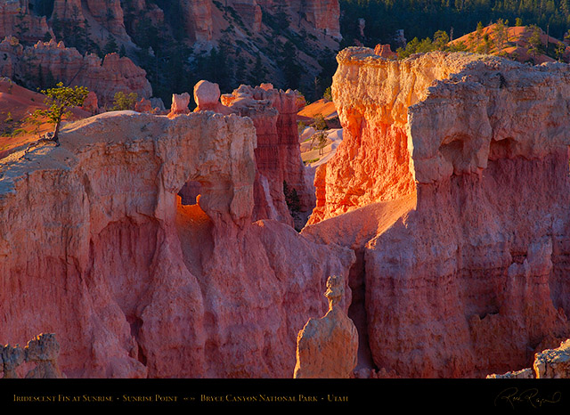 Bryce_Canyon_Iridescent_Fin_at_Sunrise_X1959
