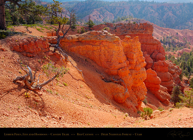 Red_Canyon_Limber_Pines_Cassidy_Trail_X2218