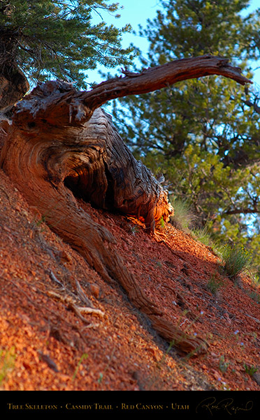 Red_Canyon_Tree_Skeleton_Cassidy_Trail_X2166