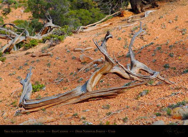 Red_Canyon_Tree_Skeleton_Cassidy_Trail_X2184
