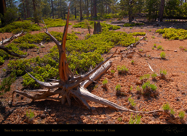 Red_Canyon_Tree_Skeleton_Cassidy_Trail_X2235