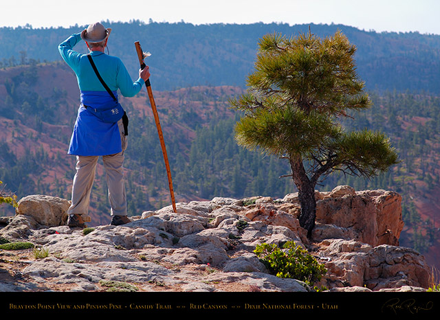 Red_Canyon_View_Pinyon_Pine_Cassidy_Trail_X2223
