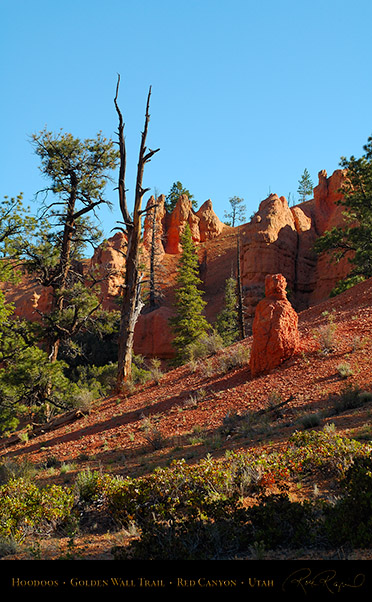 Red_Canyon_Hoodoos_Golden_Wall_Trail_X5724
