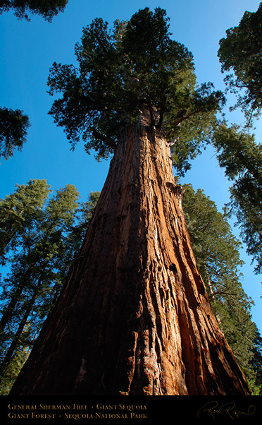 General_Sherman_Tree_Sequoia_X0203