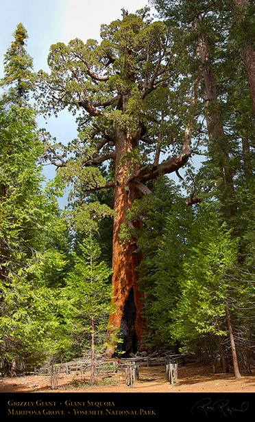 Grizzly_Giant_Sequoia_Mariposa_Grove_3086