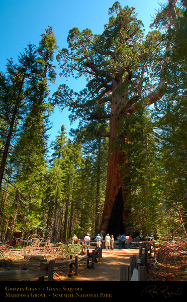 Grizzly_Giant_Sequoia_Mariposa_Grove_X2354
