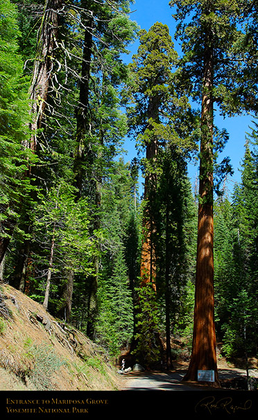 Mariposa_Grove_Entrance_2654