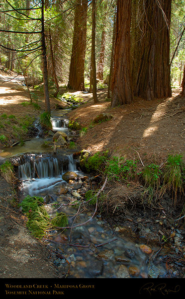Woodland_Creek_Mariposa_Grove_X2349