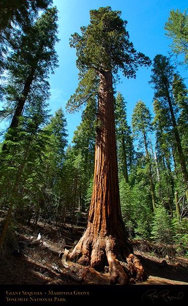 mariposa grove of giant sequoias