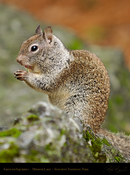 Ground_Squirrel_Mirror_Lake_2460