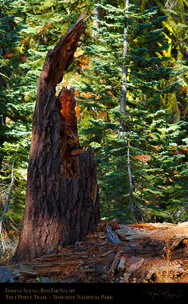 Forest_Scene_Taft_Point_Trail_X6789