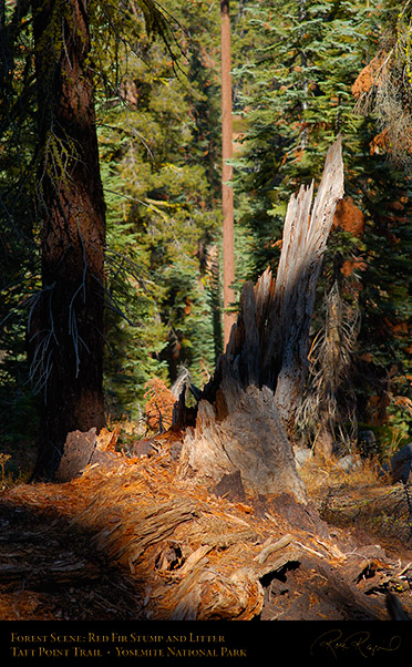 Forest_Scene_Taft_Point_Trail_X6644