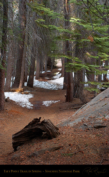 Taft_Point_Trail_Spring_3083