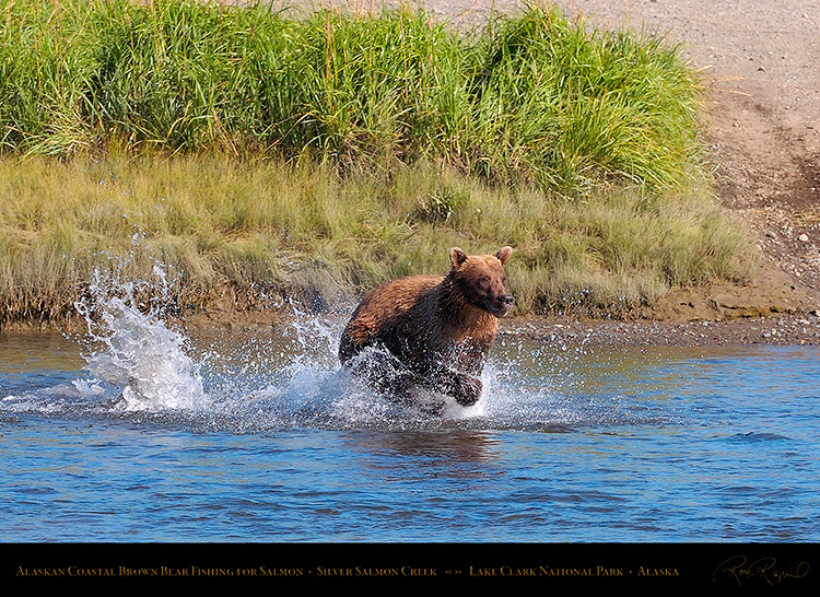 BrownBear_Fishing_HS2889