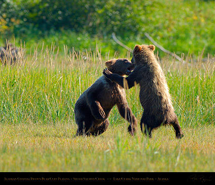 BrownBearCubs_Playing_X2826M