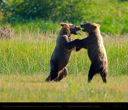 BrownBearCubs_Playing_X2827M