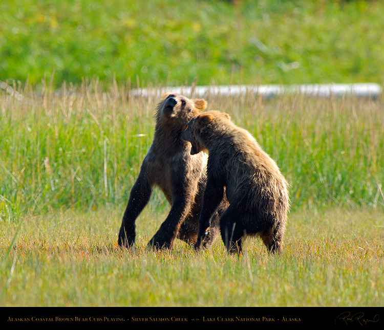 BrownBearCubs_Playing_X2840M