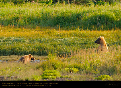 BrownBear_GoldenFemale_andCub_X3247
