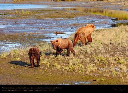 BrownBear_GoldenFemale_andCubs_HS2314