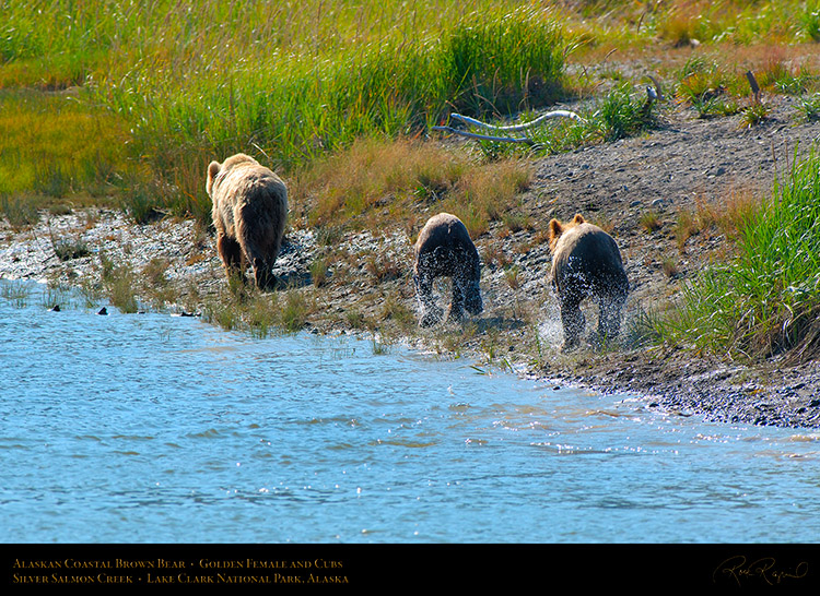 BrownBear_GoldenFemale_andCubs_X2852