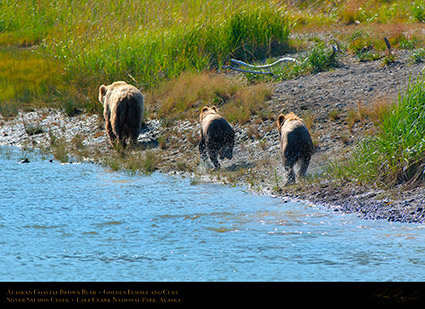 BrownBear_GoldenFemale_andCubs_X2853
