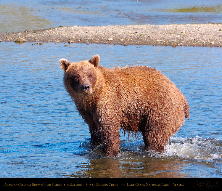 BrownBear_Fishing_HS2947M