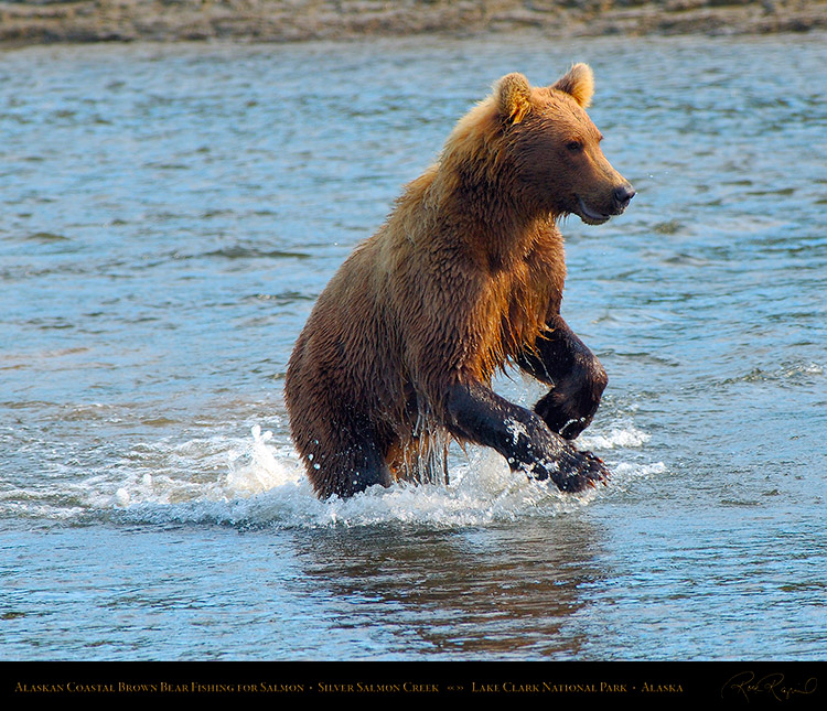 BrownBear_Fishing_X3012M