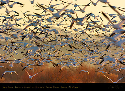 SnowGeese_SunriseFlyout_2774