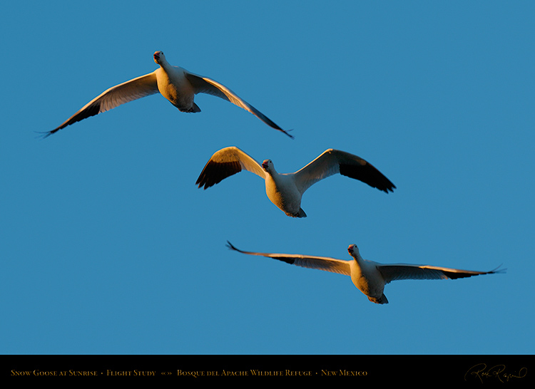 SnowGoose_FlightStudy_4736-38_SXL