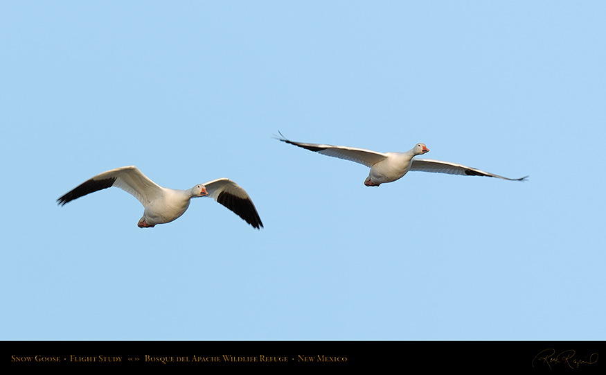 SnowGoose_FlightStudy_6718-19_16x9_SXL