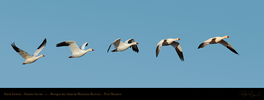 SnowGoose_FlightStudy_SXXL