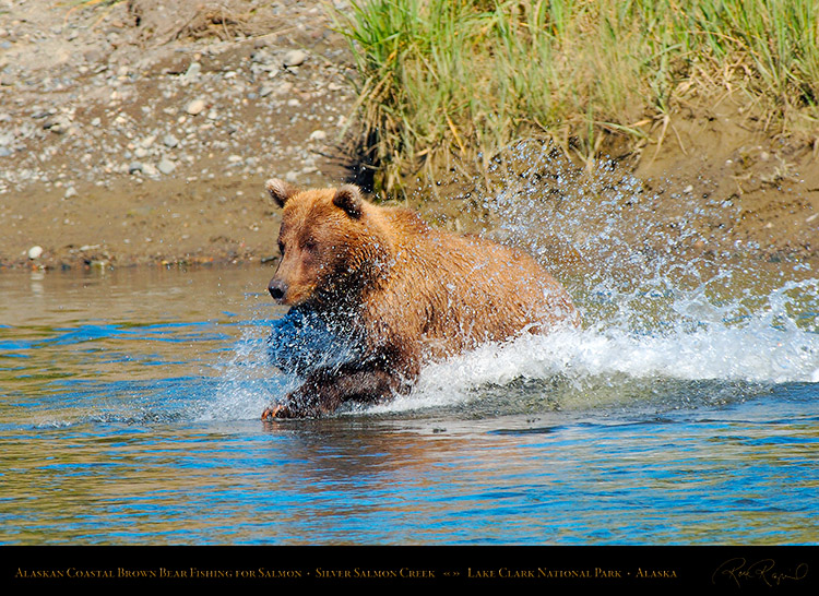 BrownBear_Fishing_X3943