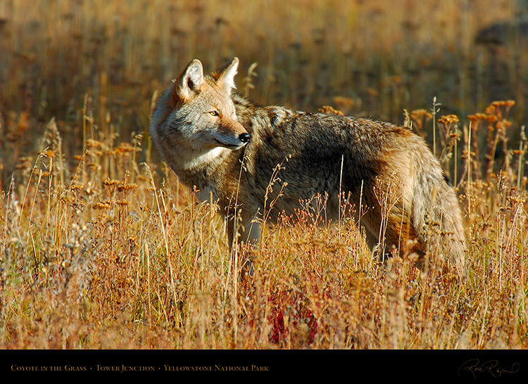 Coyote_TowerJunction_0326