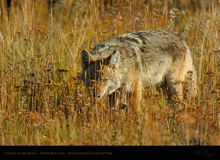 Coyote_TowerJunction_0334