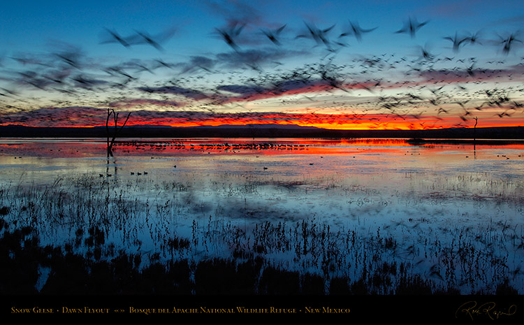 Bosque_del_Apache_Dawn_Flyout_X8725