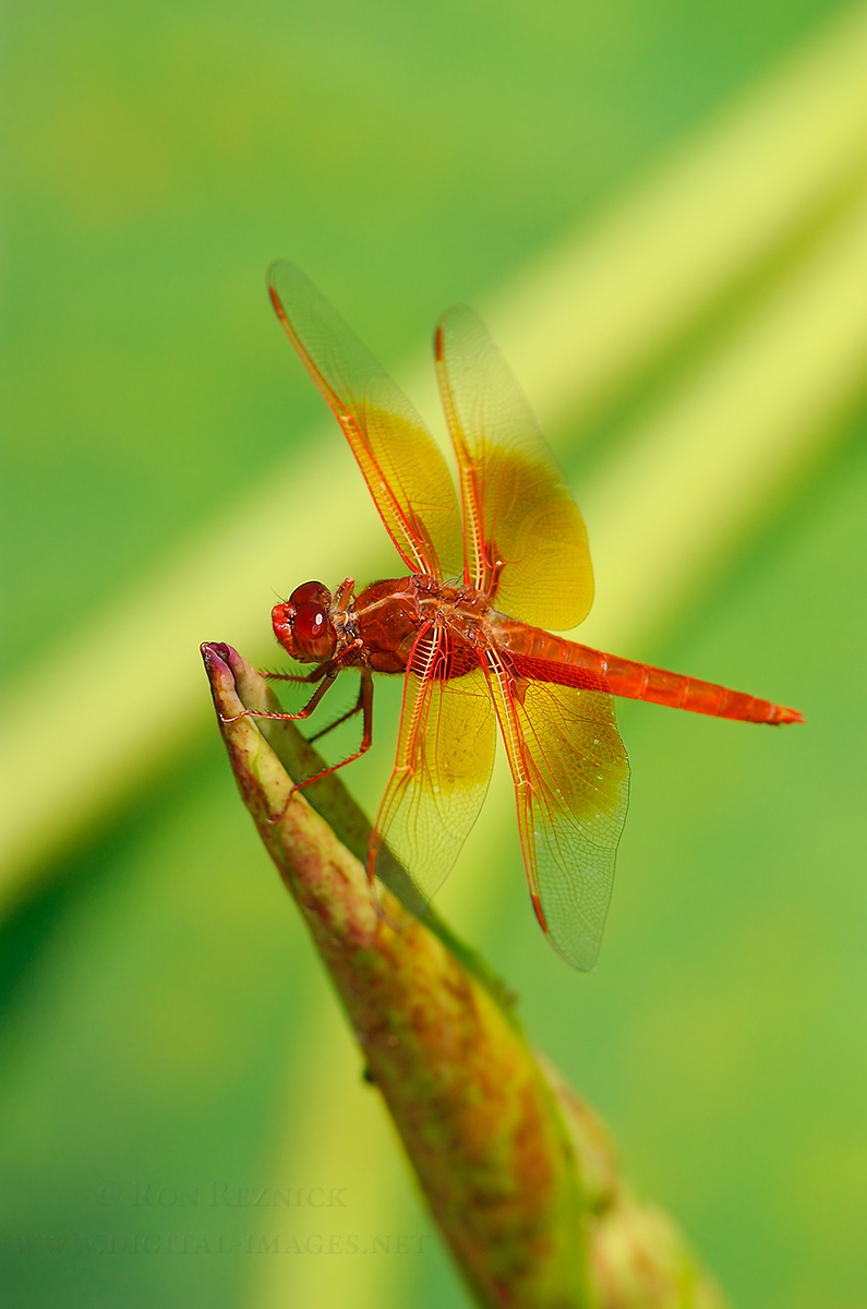 Bees, Flies and Dragonflies