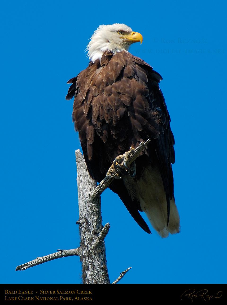 Eagles Index plus Gold...