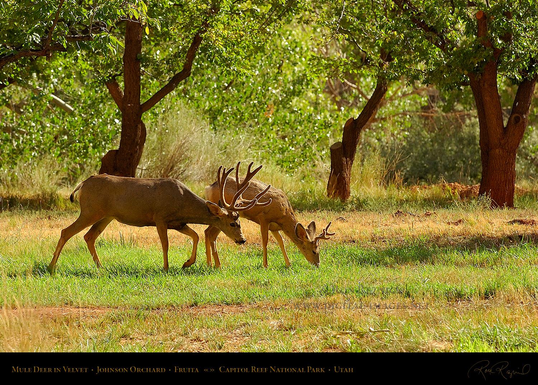 Utah scenery and national parks for Deer scenery
