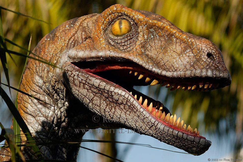 Velociraptor_5953.jpg